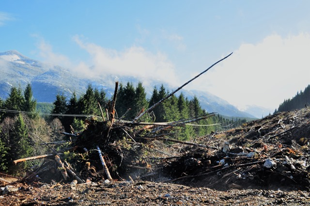 Clearcut logging on North Vancouver Island  2018-03-01 bruce witzel photo