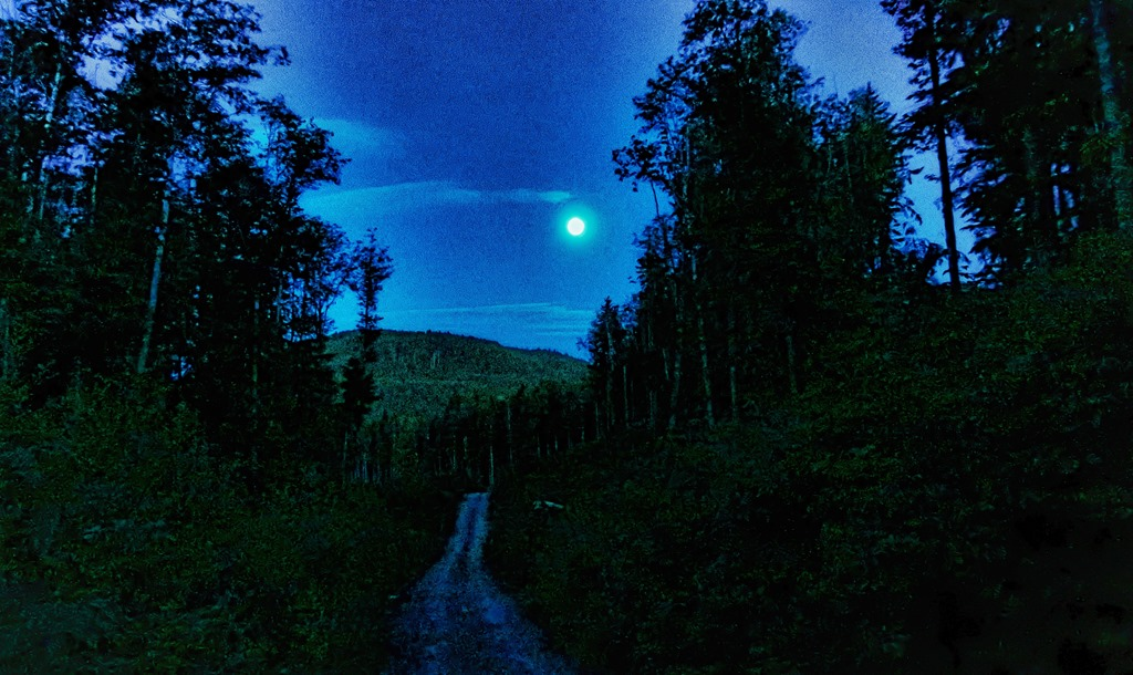 Full moon over North Island forest and logging road at 10.30 pm  2021-06-23 bruce witzel photo